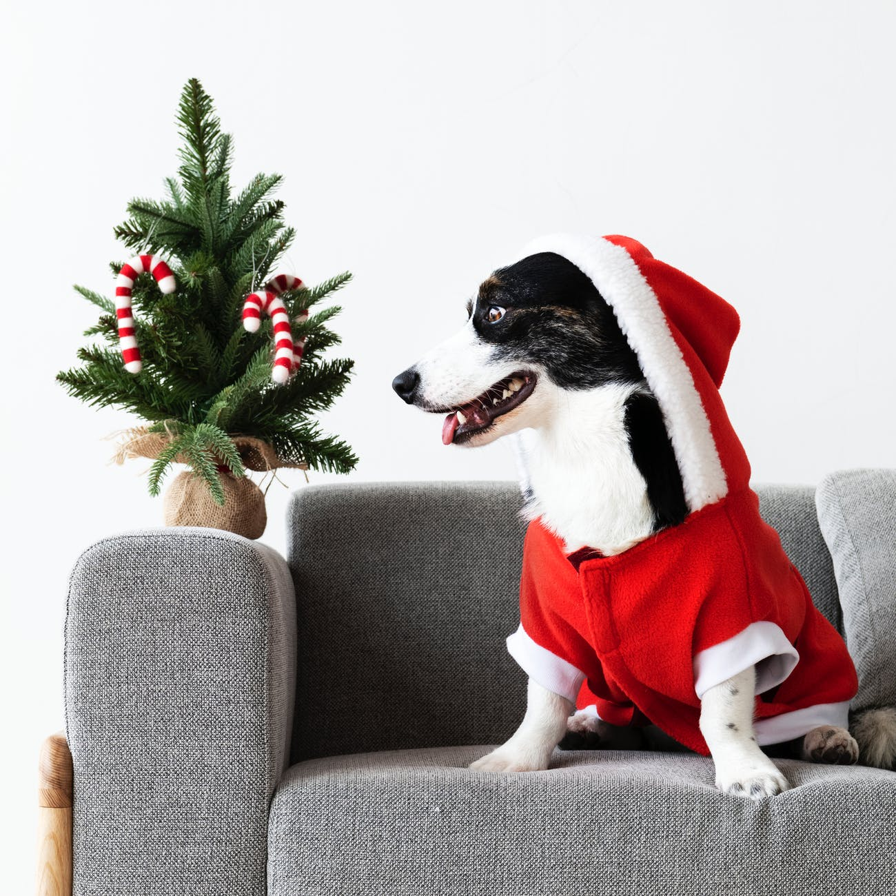 photo of dog sitting on couch